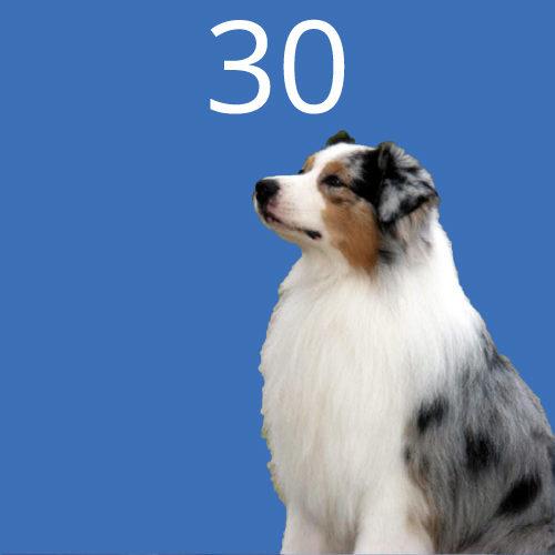 30-bluberyl-dog
